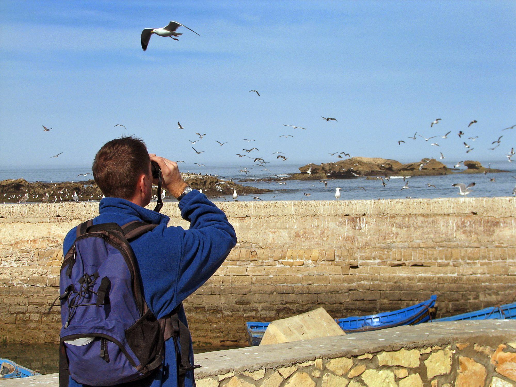 Tujuan Pengamatan Burung Yang Ada Di Long Island